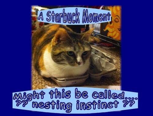 starbuck nesting instinct?