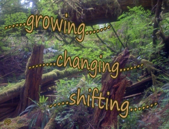 don't go through life, growing changing shifting