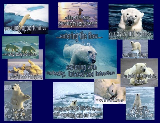 polar bears 2013