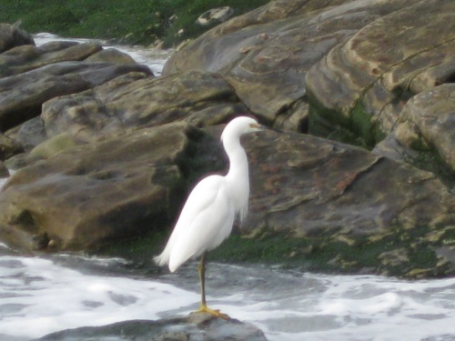 Egret at Weston Beach