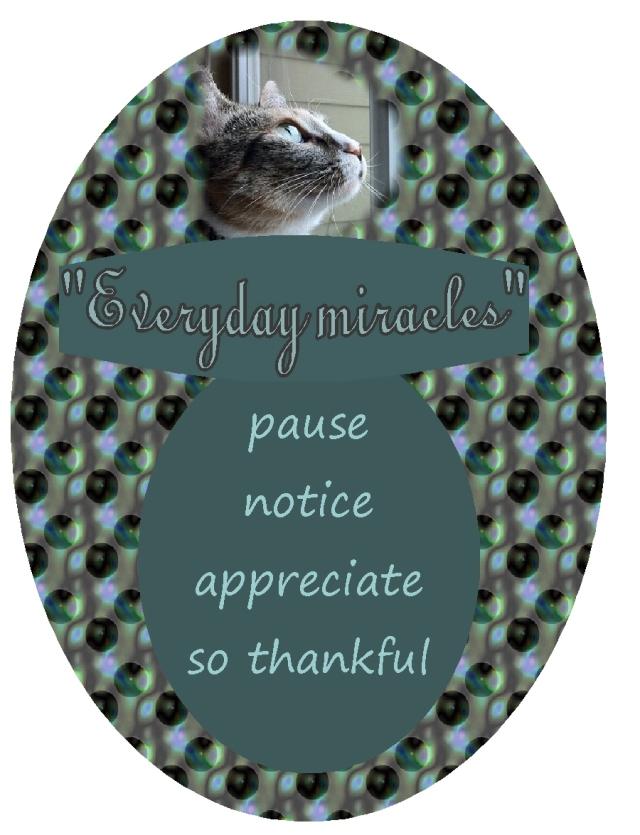 pause notice appreciate so thankful