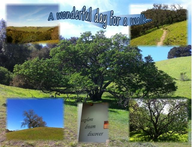 A good day for a walk...wonderful!
