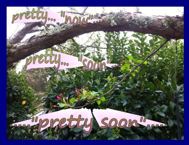 pretty now pretty soon pretty soon apple tree