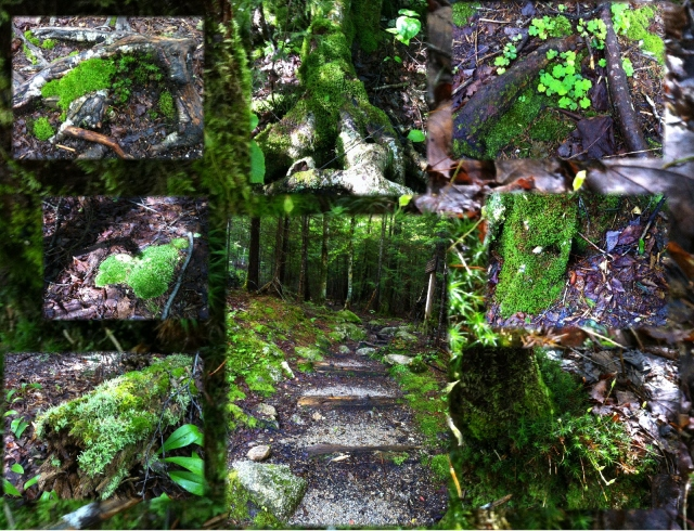 New Hampshire Woods, so much beautiful moss