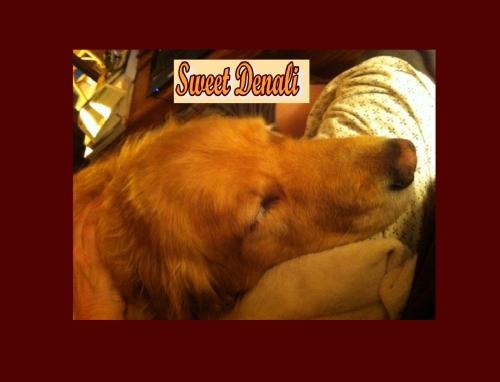 Denali...sweet Denali