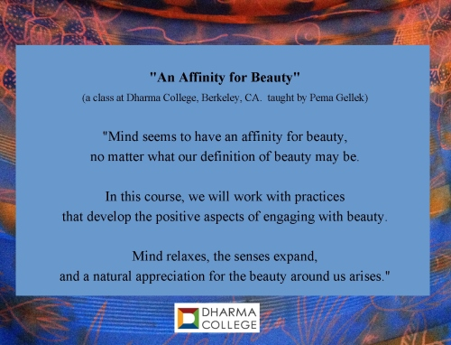 Dharma College Affinity for Beauty class