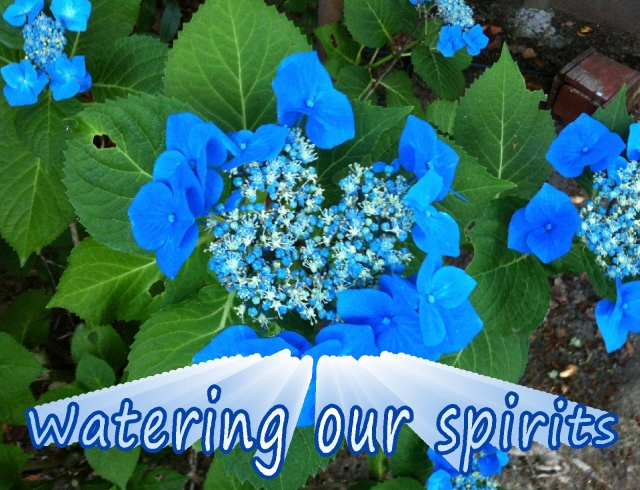 watering our spirits  simply watering our spirits