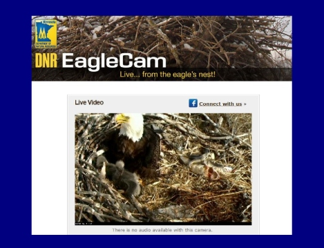 eagle cams minnesota