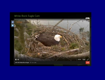 eagle cams white rock