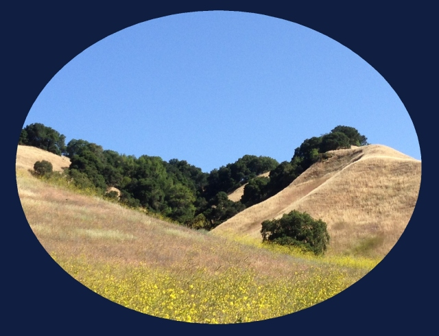 Briones Regional Park...mustard blossoms and golden hills