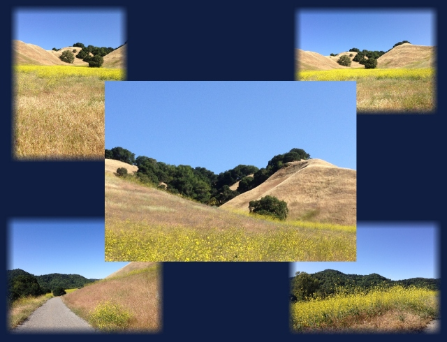 Briones Regional Park mustard and golden hills