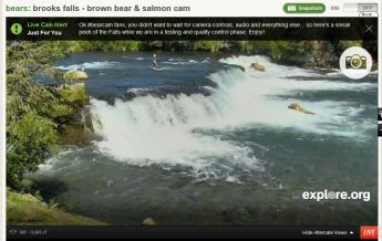 live cam brooks falls alaska  bearable falls