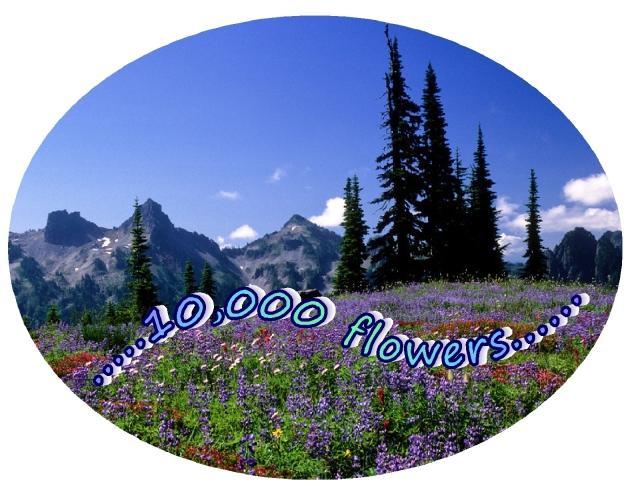 Nurturing 10,000 flowers goodness kindness generosity