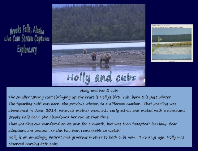 brooks falls Holly and her cubs...nurtured by nature