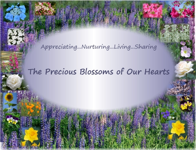 The Blossoms of Our Hearts...appreciating nurturing living sharing