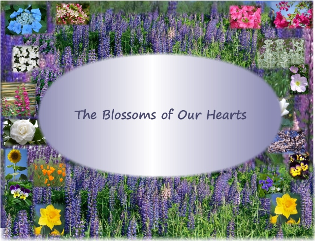 The Blossoms of Our Hearts